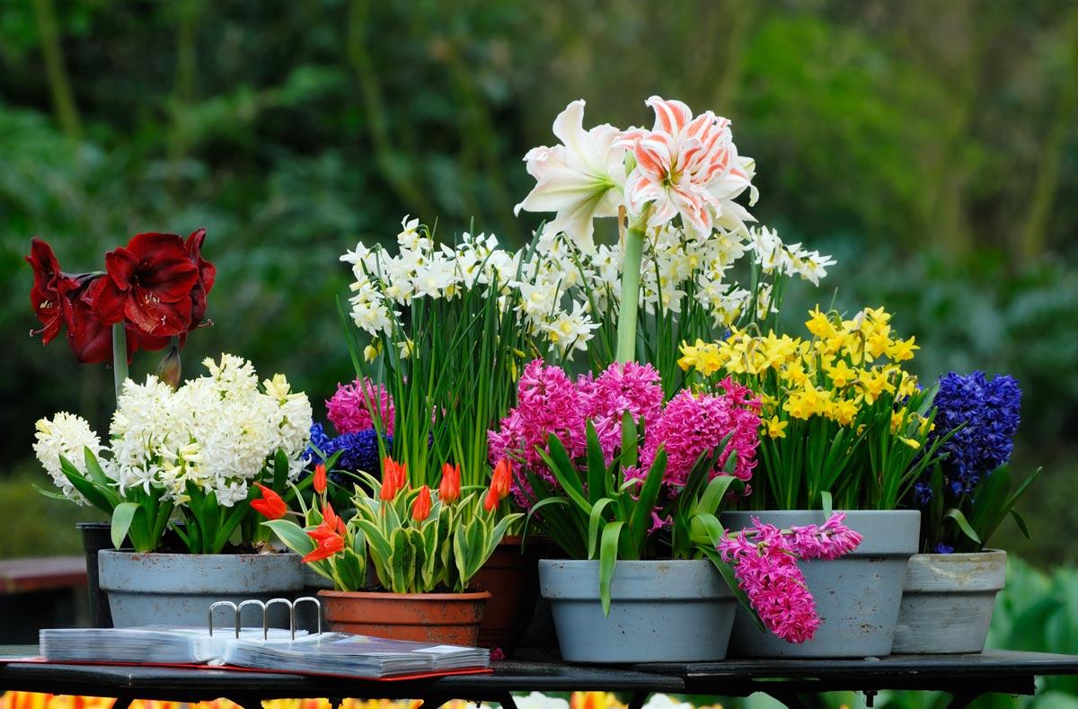 Горшки с цветами. Фото с сайта www.atlanticavenuegarden.com