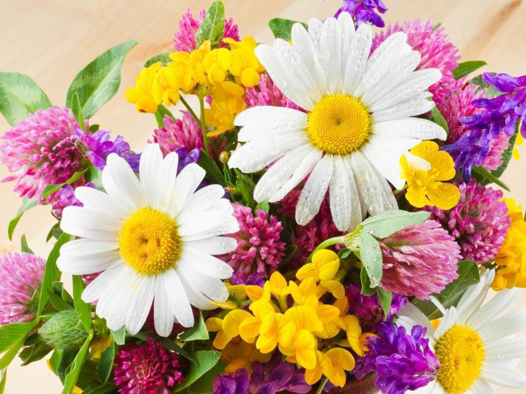 Флористическая композиция с ромашками. Фото с сайта www.badfon.ru
