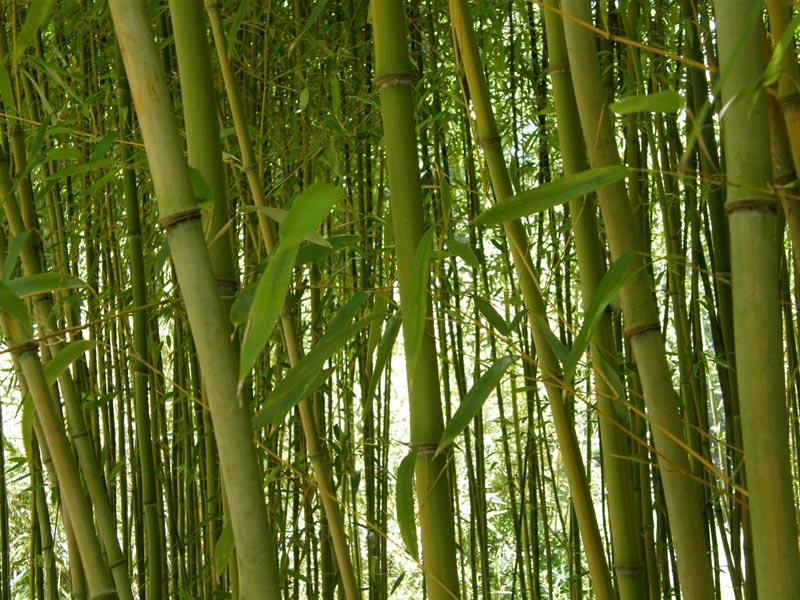 Что общего у бамбука и фейерверка? Фото с сайта www.xookazine.nl