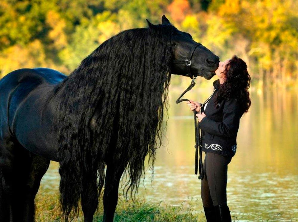 Прогулка на лошадях - хороший вариант подарка-впечатления. Фото с сайта fastpic.ru