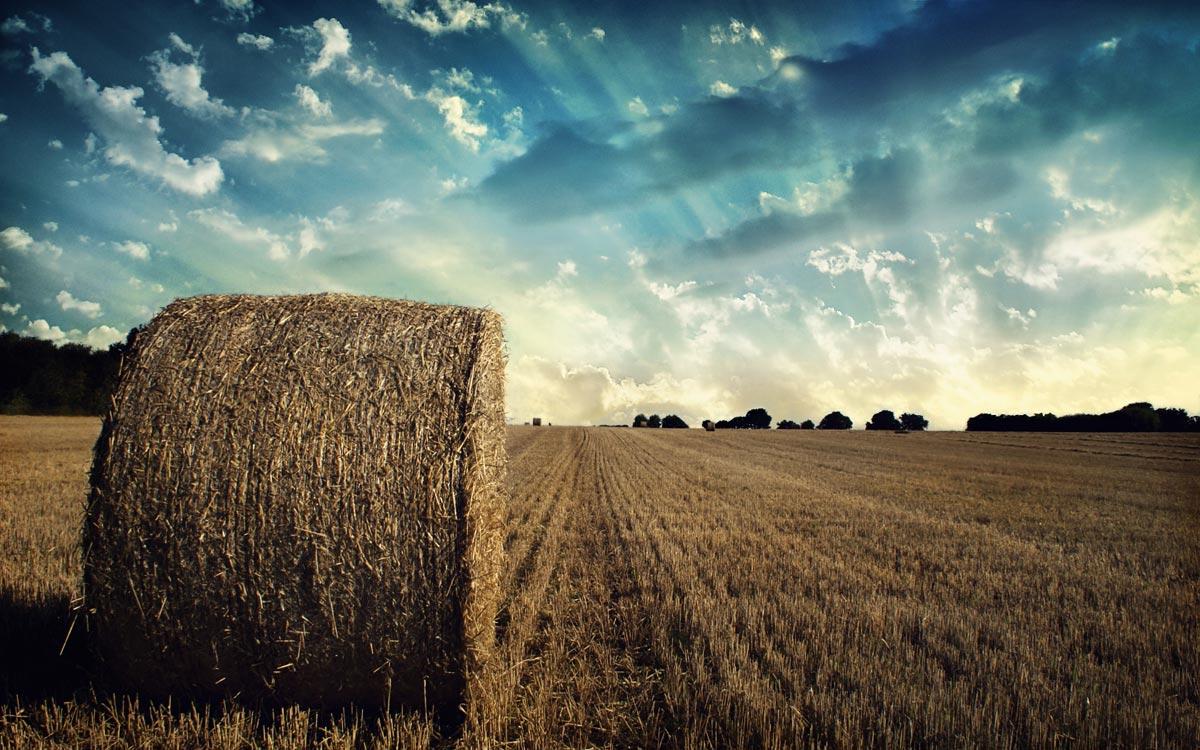 Экономика сельского хозяйства переживала разные времена. Фото с сайта www.zastavki.com