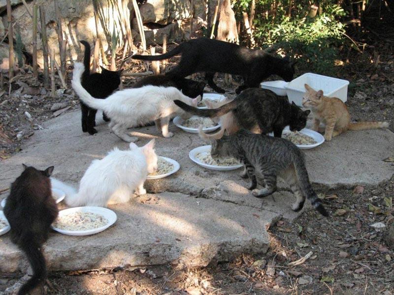 Покормите бездомных кошек. Фото с сайта mtdata.ru