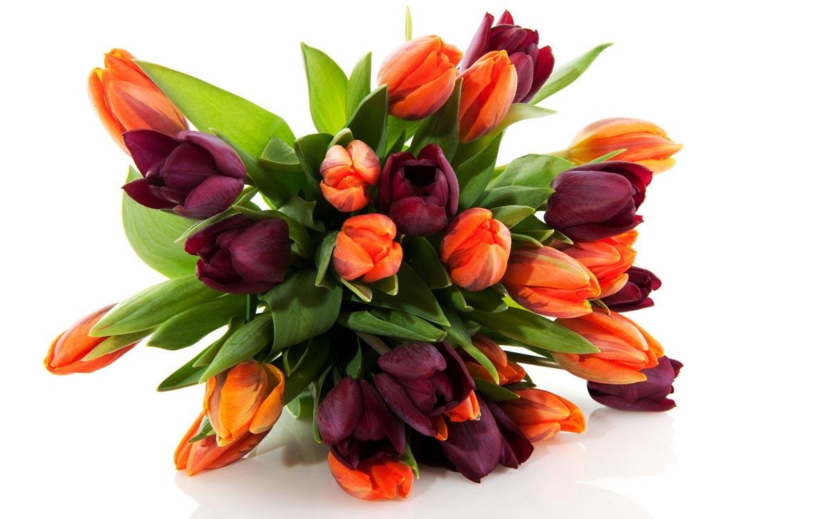 Тюльпаны отлично подойдут. Фото с сайта mykartinka.ru