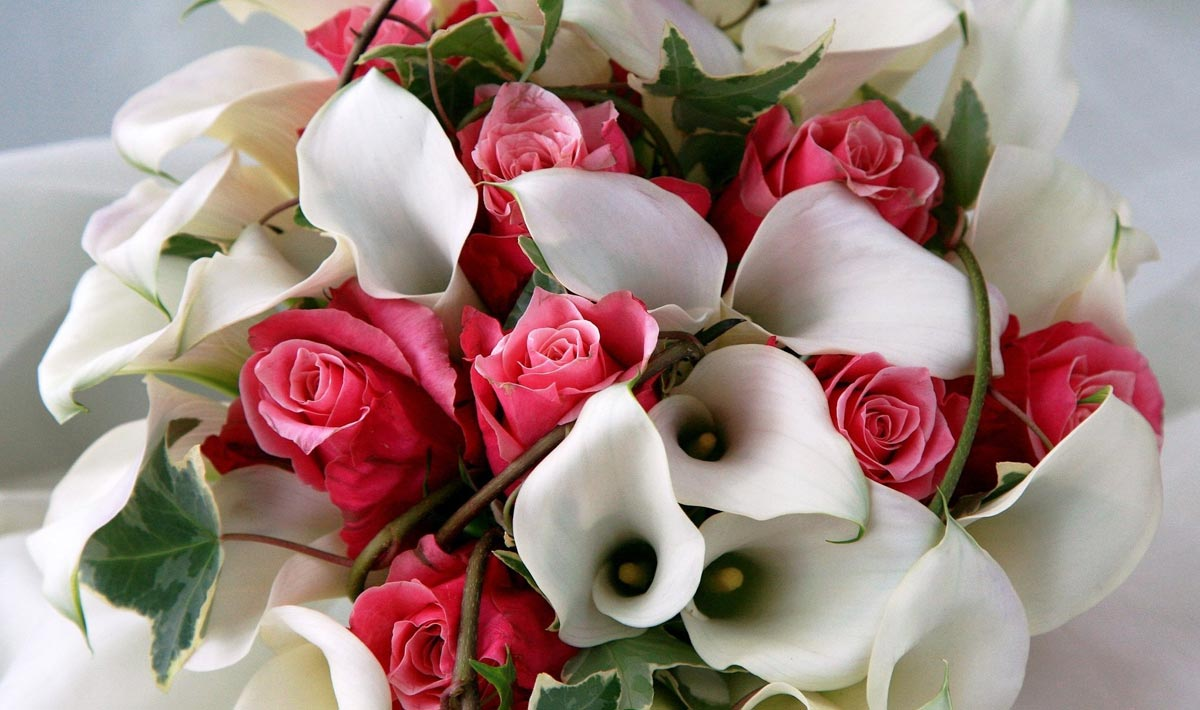 Каллы с розами - очень выгодное сочетание. Фото с сайта 1zoom.ru