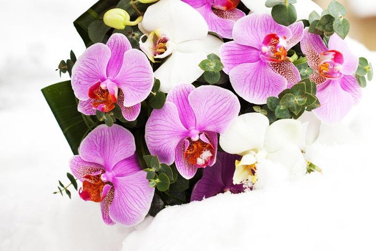 Орхидеи имеют массу цветовых вариаций. Фото с сайта amour-nsk.ru
