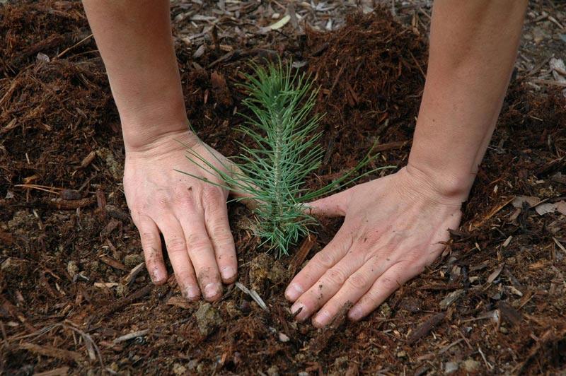 В честь праздника можно провести акцию по посадке деревьев. Фото с сайта www.pattilaird.com