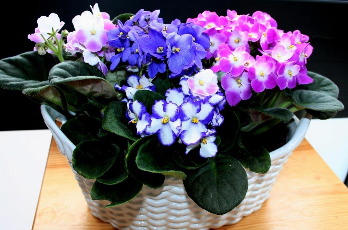 Живые цветы - подарок со смыслом. Фото с сайта brumbrum.ru