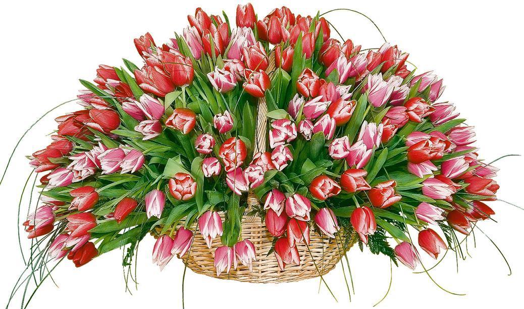 Тюльпаны хороши и в монобукете. Фото с сайта www.flora18.ru