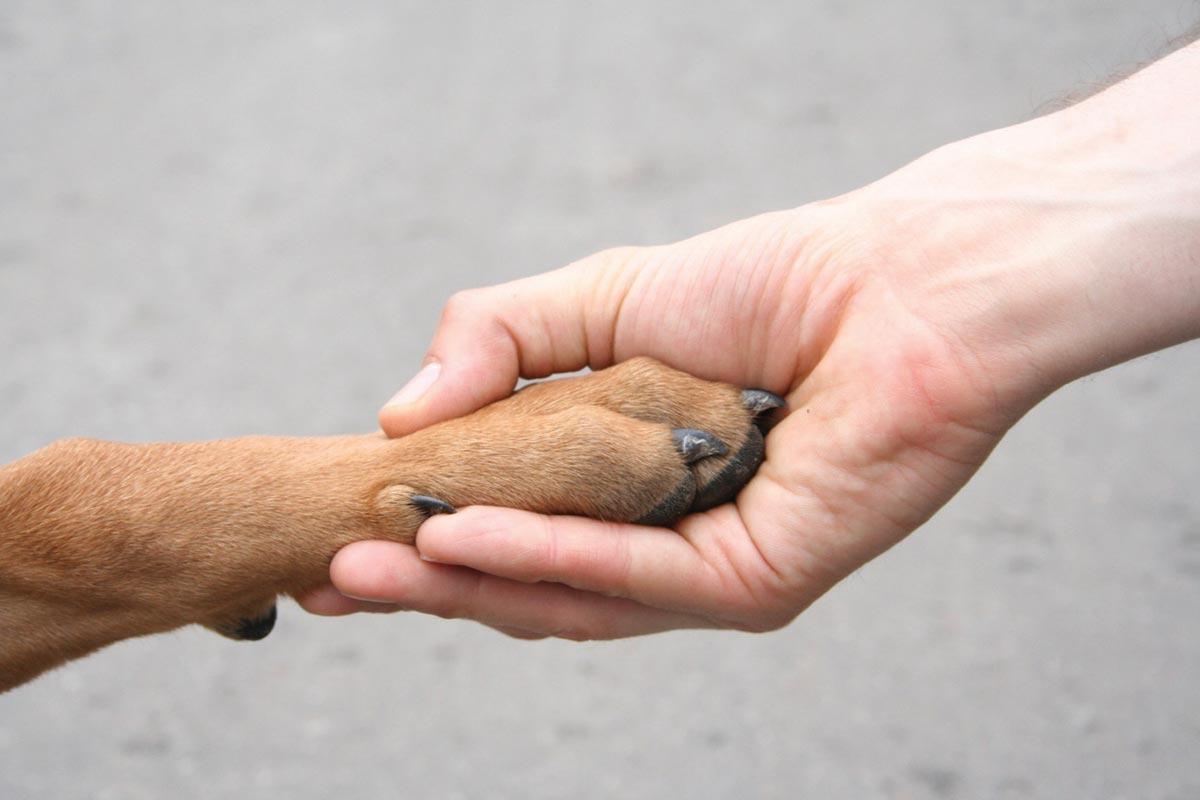 Человек должен жить в содружестве с природой. Фото с сайта www.crowdwillfund.ru