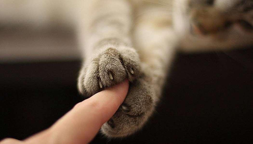Коты - друзья людей. Фото с сайта lets-speak.ru