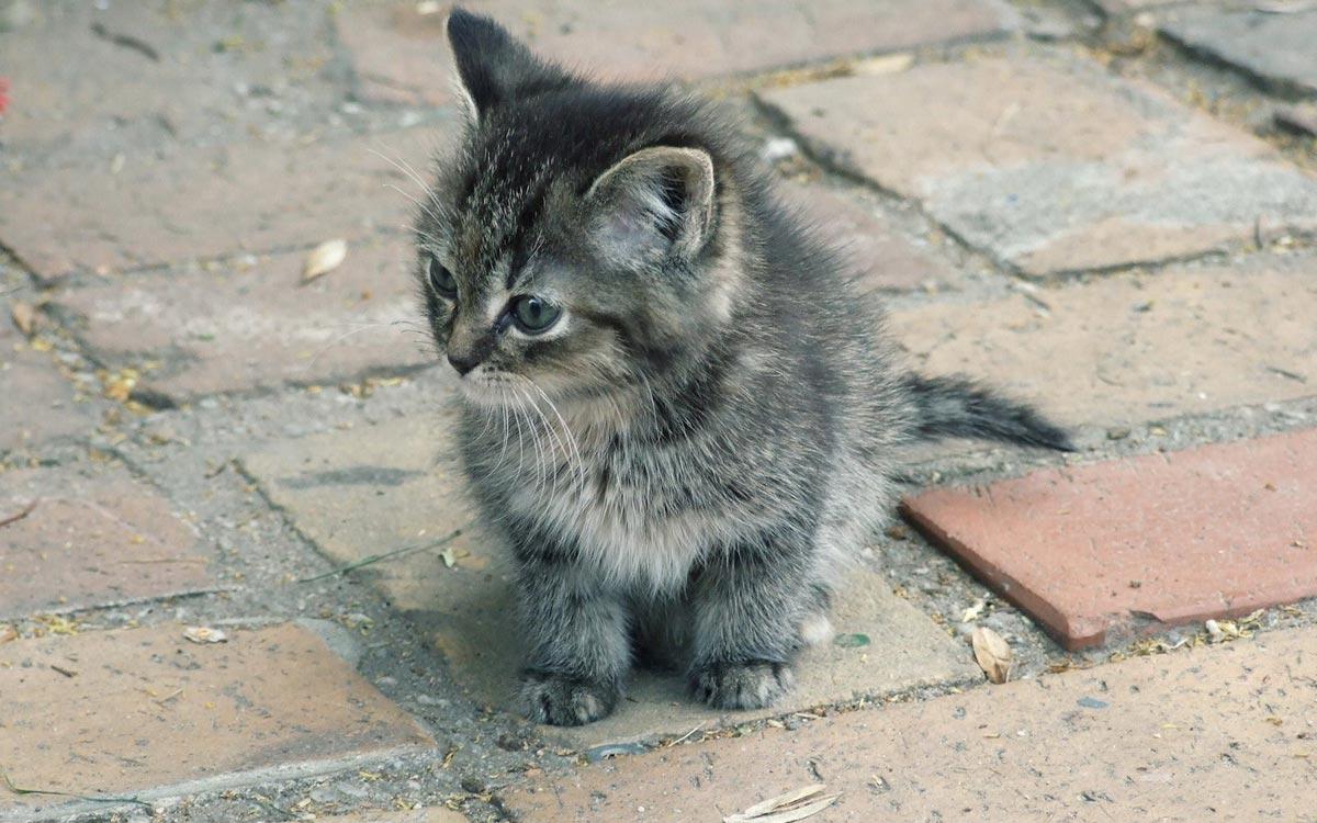 Возьмите котенка домой. Фото с сайта mota.ru