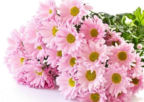Нежные хризантемы. Фото с сайта цветы-рядом.рф