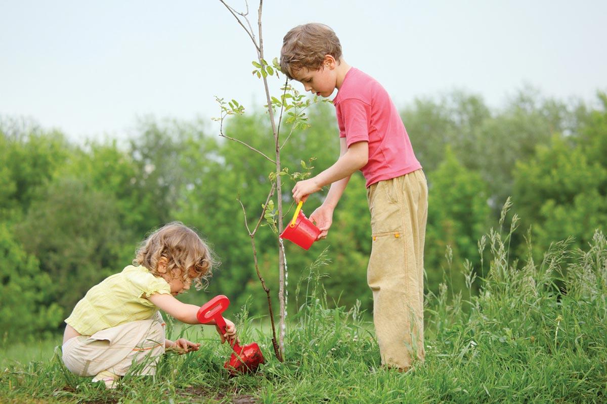 Посадите дерево отсвоего имени. Фото с сайта kievpravda.com