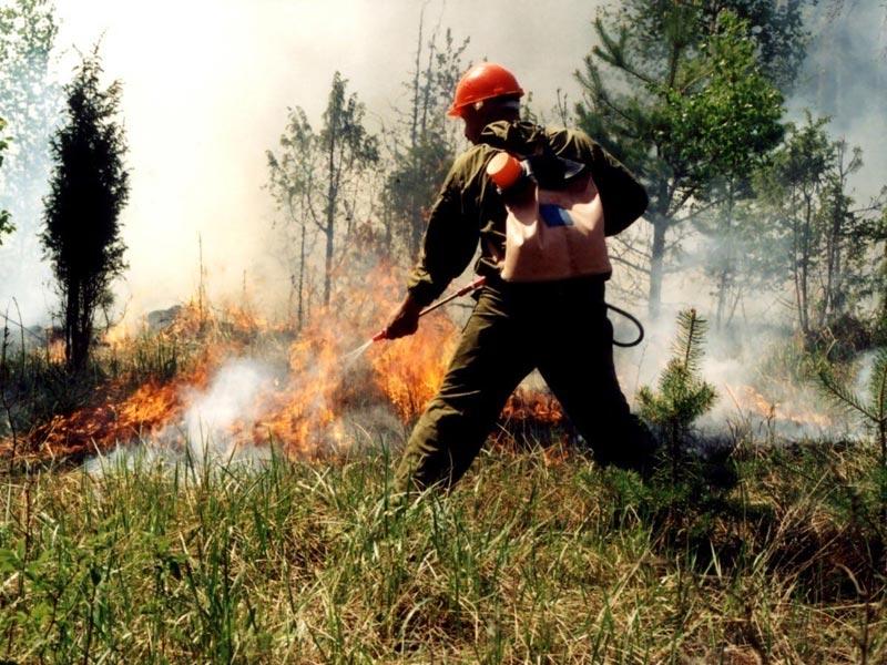 Поздравьте тех, кто работает в сфере лесного хозяйства. Фото с сайта newsprom.ru