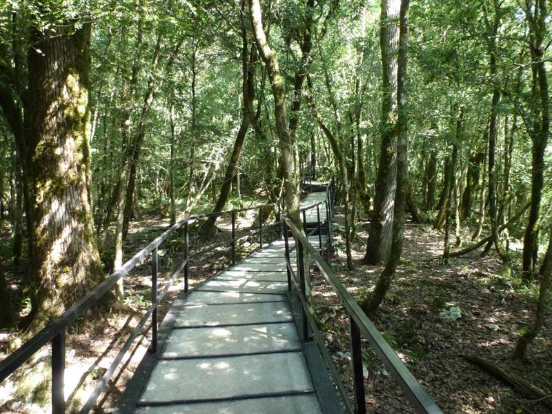 Пешие прогулки в мае будут полезны для здоровья. Фото с сайта www.sochiadm.ru