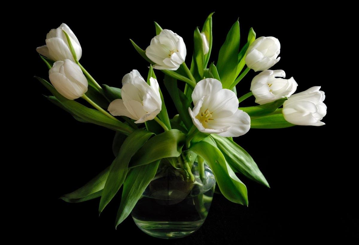 Тюльпаны очень нежные. Фото с сайта picsfab.com