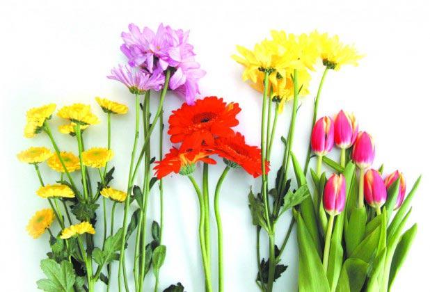 Цветы могут многое рассказать. Фото с сайта bulbanews.ru