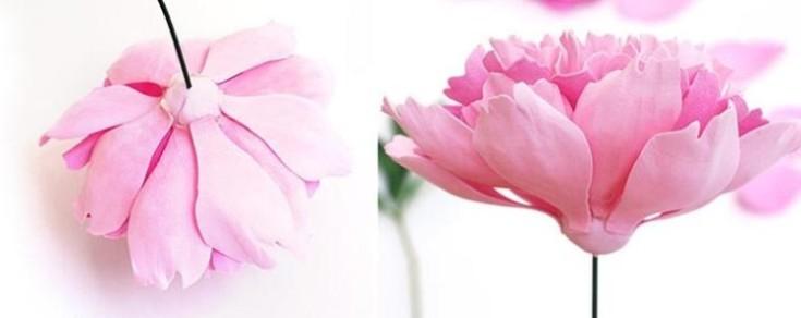 Цветы из фоамирана своими руками 24